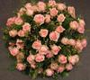 NR 30 Gerbe in rozen prijs 65 euro